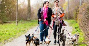 Dos mujeres pasean un grupo de perros. Kzenon (iStock)