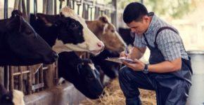 Hombre trabajando en una granja (iStock)
