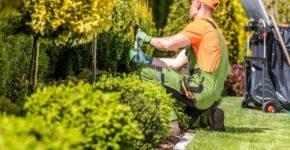 Jardinero arreglando zonas verdes (Istock)