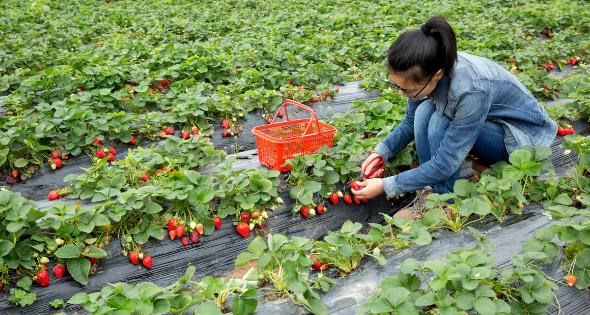 Fruta de Toro es un negocio familiar que ha pasado de generación en generación