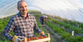 Oferta de empleo en el sector agrícola